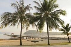 Palmen en een hangmat Royalty-vrije Stock Fotografie