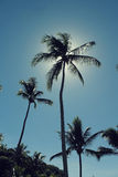Palmen en een mooie blauwe hemel Royalty-vrije Stock Foto's