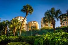 Palmen en flatgebouw met koopflatstorens in Heilige Petersburg, Florida Royalty-vrije Stock Afbeeldingen