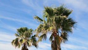 Palmen en gedeeltelijk bewolkte blauwe hemellijn die blazen stock footage