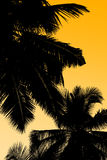 Palmen en hemel Royalty-vrije Stock Afbeeldingen