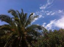 Palmen en hemel Royalty-vrije Stock Foto's