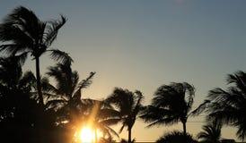 Palmen en hemel Royalty-vrije Stock Afbeelding