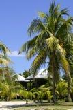 Palmen en hutten Stock Foto's