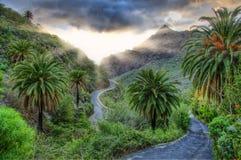 Palmen en kronkelweg dichtbij Masca-dorp met bergen, Tenerife Stock Foto's