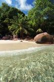 Palmen en oceaan. Stock Fotografie