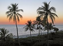 Palmen en oceaanzonsondergang stock afbeelding