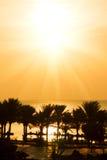 Palmen en overzees bij tropische zonsondergang (zonsopgang) Royalty-vrije Stock Afbeeldingen