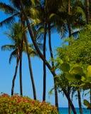 Palmen en overzeese druiven in Hawaï Stock Foto's