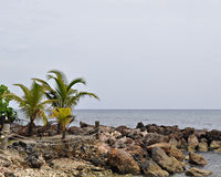 Palmen en rotsachtige oever Royalty-vrije Stock Fotografie