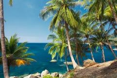 Palmen en stenen Stock Afbeelding
