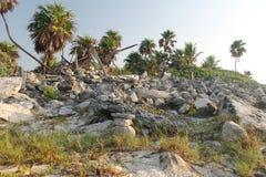 Palmen en stenen Royalty-vrije Stock Foto