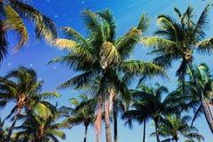 Palmen en Sterrenachtergrond Stock Foto's