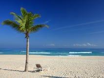 Palmen en stoel op het tropische strand Royalty-vrije Stock Afbeeldingen