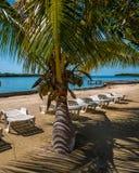 Palmen en stoelen in Belize royalty-vrije stock afbeelding