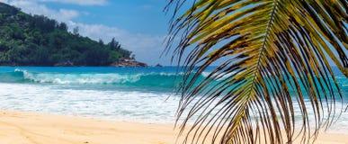 Palmen en tropisch strand met wit zand stock afbeelding