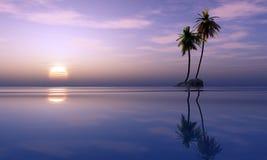 Palmen en tropische zonsondergang Stock Foto's