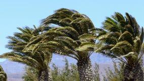 Palmen en wind stock footage