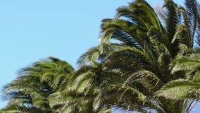 Palmen en wind stock videobeelden