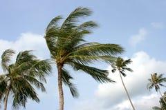 Palmen en wind. stock foto's