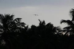 Palmen en wit zandig strand bij de zonsondergang in Caribbeans royalty-vrije illustratie