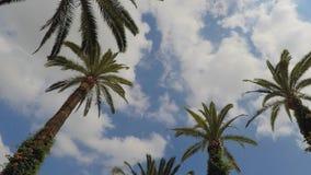 Palmen en Wolken stock footage