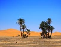 Palmen en wolkenloze hemel Stock Foto