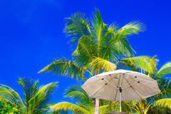 Palmen en zonparaplu's op een tropisch strand, de hemel in Stock Foto