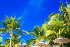 Palmen en zonparaplu's op een tropisch strand, de hemel in Royalty-vrije Stock Foto's