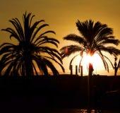 Palmen en zonsondergang Royalty-vrije Stock Foto