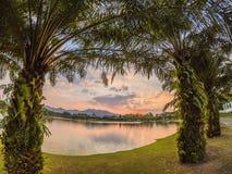 Palmen en zonsondergang van de hemel, bezinning stock afbeeldingen