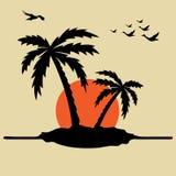 Palmen en zonsopgang Stock Foto's