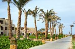 Palmen entlang ägyptischer Straße Stockbild