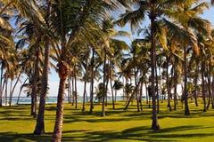 Palmen entlang dem karibischen Meer Stockfotos