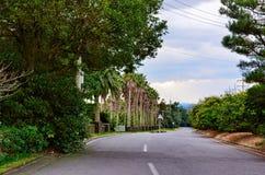 Palmen entlang der Straße Lizenzfreies Stockbild