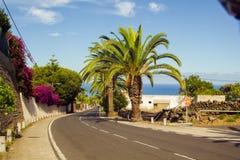 Palmen entlang der Straße nahe dem Meer Lizenzfreie Stockfotos