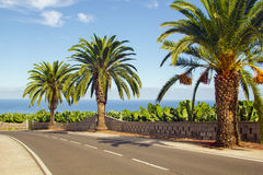 Palmen entlang der Straße nahe dem Meer Stockfotos