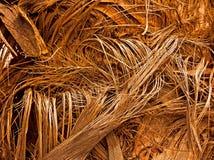 Palmen-Erguss im Winter lizenzfreie stockfotografie