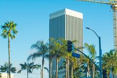 Palmen in Fairfax-Allee Stockbild