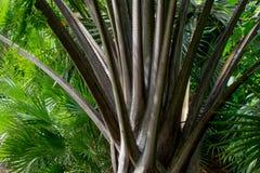 Palmen in Fiji Royalty-vrije Stock Afbeelding