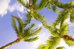 Palmen in Florida Lizenzfreies Stockbild