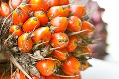 Palmen-Frucht. lizenzfreies stockbild