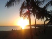 Palmen in Fuerteventura op vakantie stock afbeelding