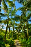 Palmen, Gärten durch die Bucht, Singapur Lizenzfreie Stockbilder