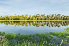 Palmen-Garten Lizenzfreie Stockfotografie