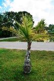 Palmen-Garten Lizenzfreie Stockfotos