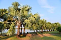 Palmen-Garten Stockfoto