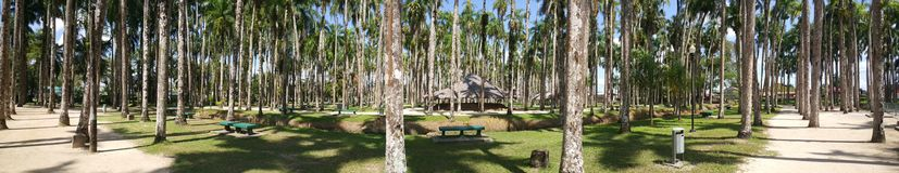 Palmen-Garten-Panorama Lizenzfreies Stockbild