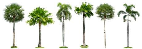 Palmen geïsoleerde inzameling op witte achtergrond royalty-vrije stock afbeelding
