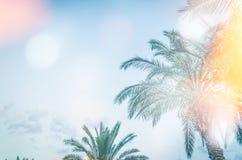 Palmen gegen blauen Himmel stockbild